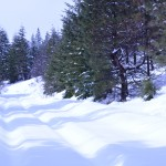 Miles and miles of XC ski and snow shoe trails in the National Forests surrounding the Columbia River Gorge.